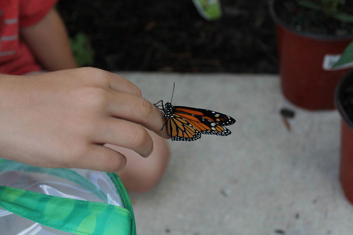 kids butterfly garden